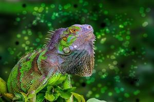 Green Iguana by Don Spears