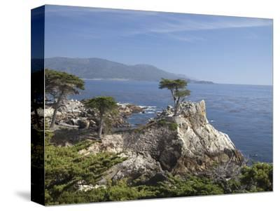 Lonely Pine on 17 Mile Drive Near Monterey, California, United States of America, North America