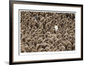 A Sea of Penguin Chicks by Donald Paulson