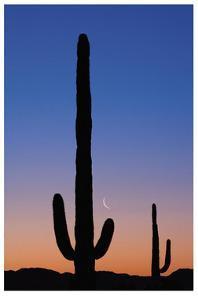 Arizona Moon & Cactus by Donald Paulson