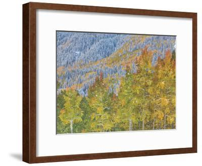 Aspen and Conifer Forest