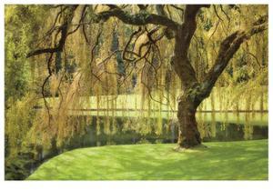 Bainbridge Island Willow by Donald Paulson