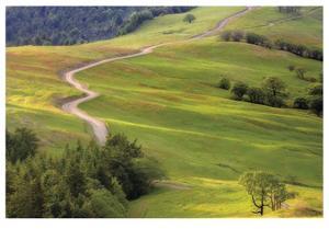 Bald Hills Redwoods National Park by Donald Paulson