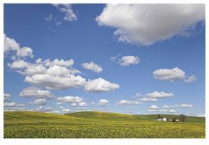 Canola Farm by Donald Paulson