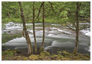 Clackamas River I by Donald Paulson