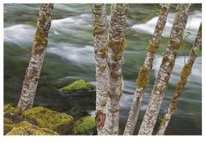 Clackamas River II by Donald Paulson