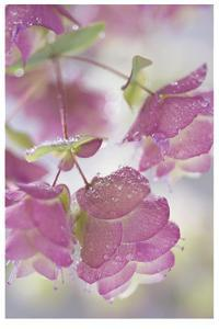 Dew Covered Oregano by Donald Paulson