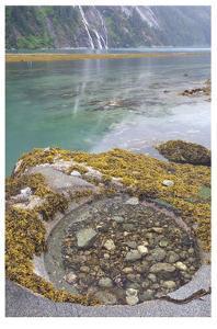 Endicott Arm Tide Pool by Donald Paulson