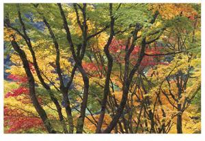 Fall Foliage by Donald Paulson