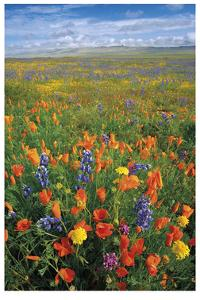 Flowers to the Horizon I by Donald Paulson