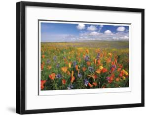 Flowers to the Horizon II by Donald Paulson