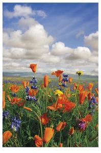 Flowers to the Horizon III by Donald Paulson