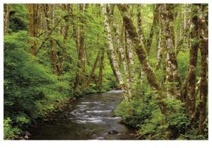 Forest Stream II by Donald Paulson