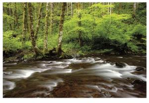 Forest Stream III by Donald Paulson