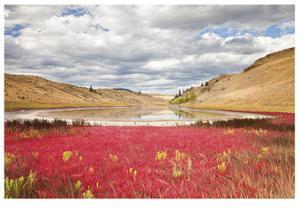 Lac Du Bois Grasslands Park I by Donald Paulson