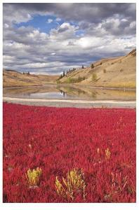 Lac du Bois Grasslands Park II by Donald Paulson