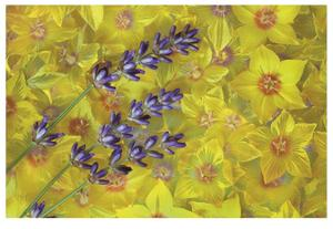 Lavendar and Yellow Loosestrife Blossoms by Donald Paulson