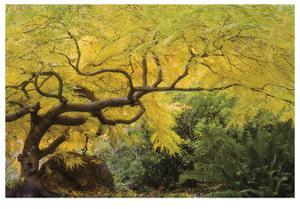 Lithia Park Arching Maple by Donald Paulson