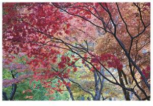 Lithia Park Fall Color I by Donald Paulson