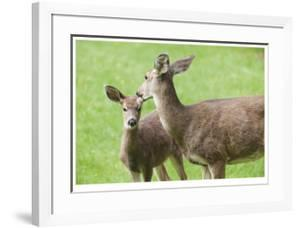 Mother With Fawn by Donald Paulson