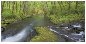 Nestucca River Panorama by Donald Paulson