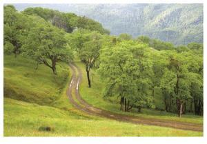 Oak Trees and Road by Donald Paulson