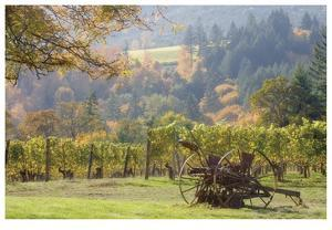 Oregon Vineyard 2 by Donald Paulson