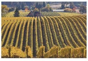 Oregon Vineyard by Donald Paulson