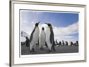Penguin Conference by Donald Paulson