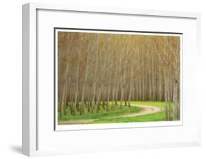 Poplar Trees and Road by Donald Paulson