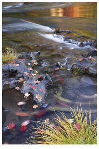 Rogue River Leaves in Motion by Donald Paulson