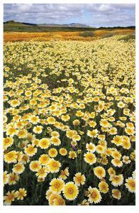 Sea of Flowers I by Donald Paulson