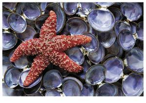 Sea Star and Clam Shells by Donald Paulson