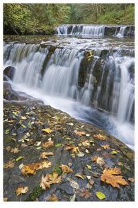 Sweet Creek Falls I by Donald Paulson