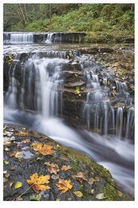 Sweet Creek Falls II by Donald Paulson