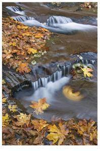 Sweet Creek Falls III by Donald Paulson