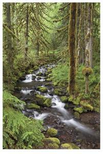 Wine Creek I by Donald Paulson