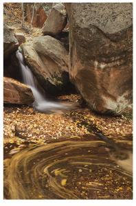 Zion National Park II by Donald Paulson