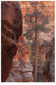 Zion Park Canyon by Donald Paulson