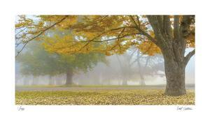 Autumn Gold by Donald Satterlee
