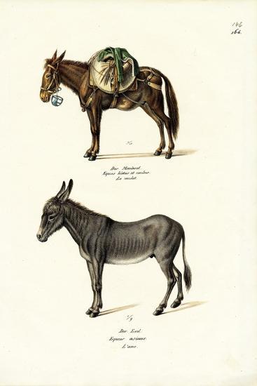 Donkey, 1824-Karl Joseph Brodtmann-Giclee Print