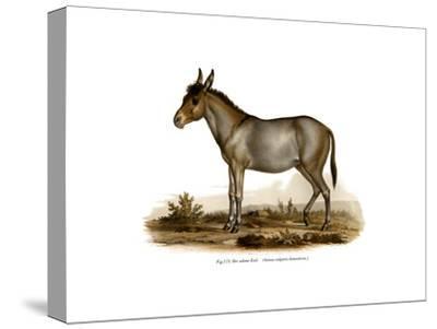 Donkey, 1860