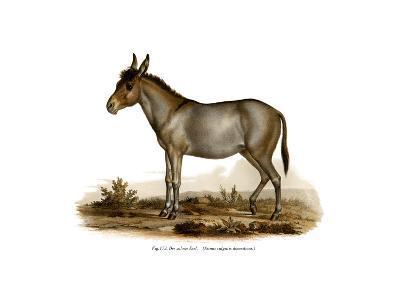 Donkey, 1860--Giclee Print
