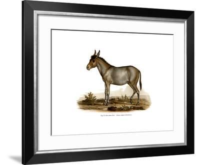 Donkey, 1860--Framed Giclee Print