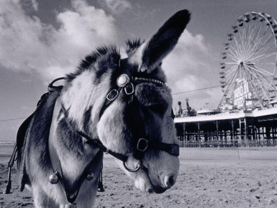 Donkey at Shorefront, Blackpool, England-Walter Bibikow-Photographic Print
