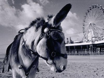 https://imgc.artprintimages.com/img/print/donkey-at-shorefront-blackpool-england_u-l-pxz8ta0.jpg?p=0