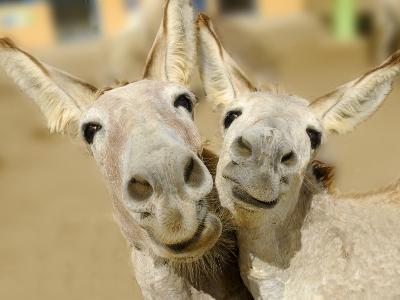 Donkey Duo-Blueiris-Photographic Print