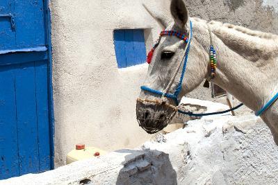 Donkey Waits at Cobbled Stairway, Santorini, Greece-David Noyes-Photographic Print
