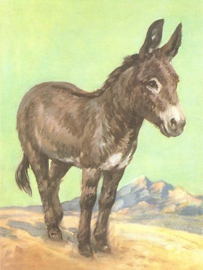 Donkey--Art Print