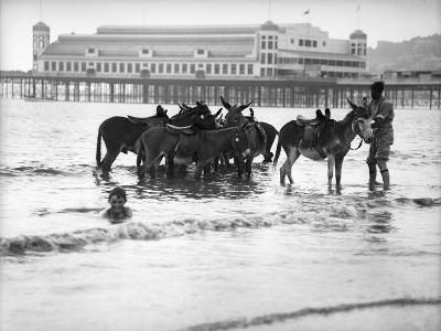 Donkeys in Sea--Photographic Print